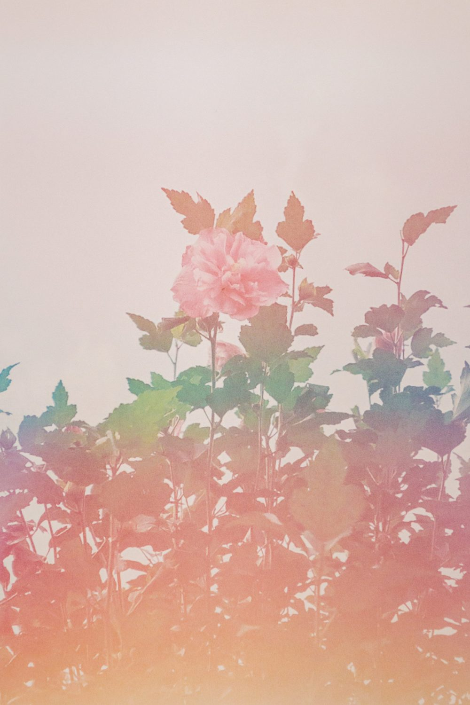 gallery_004