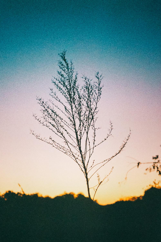gallery_009