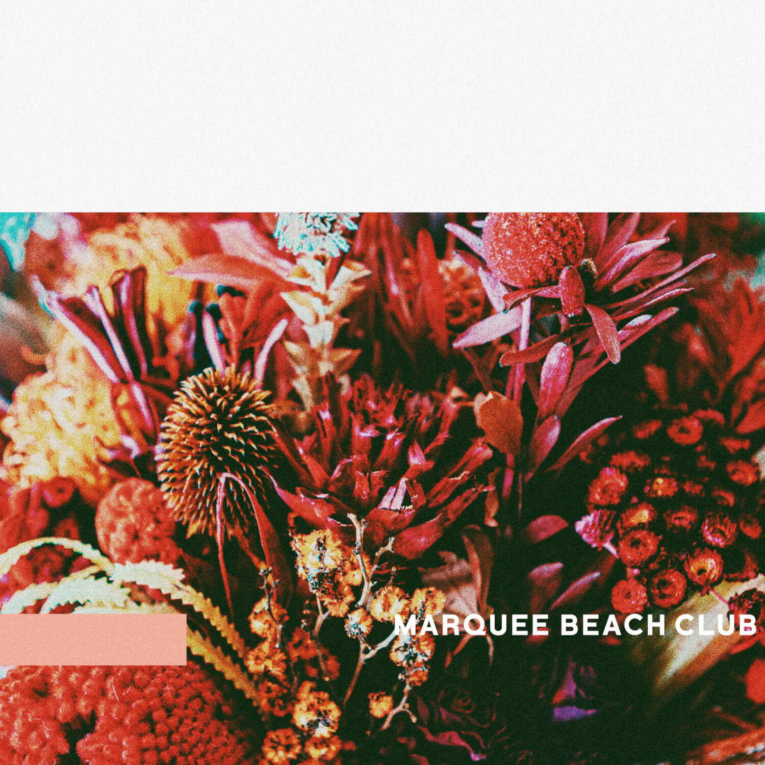 MARQUEE-BEACH-CLUB / home
