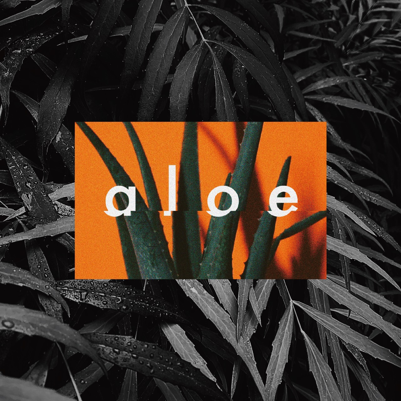 macico / aloe (maeshima soshi remix)
